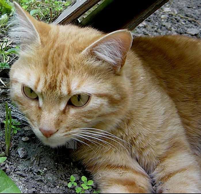 chat de rencontre