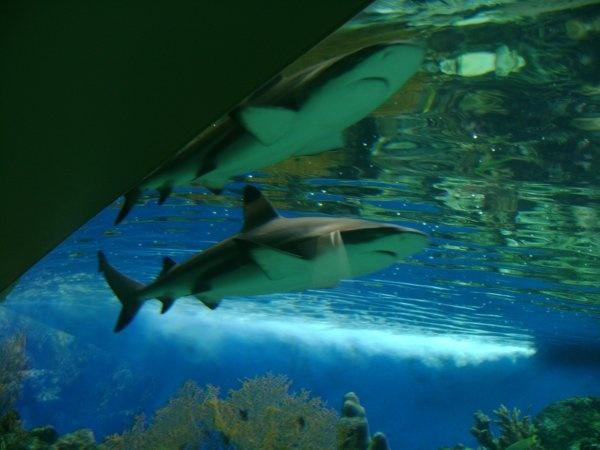 Journ es pour personnes handicap es l 39 aquarium de paris for Aquarium de paris jardin du trocadero